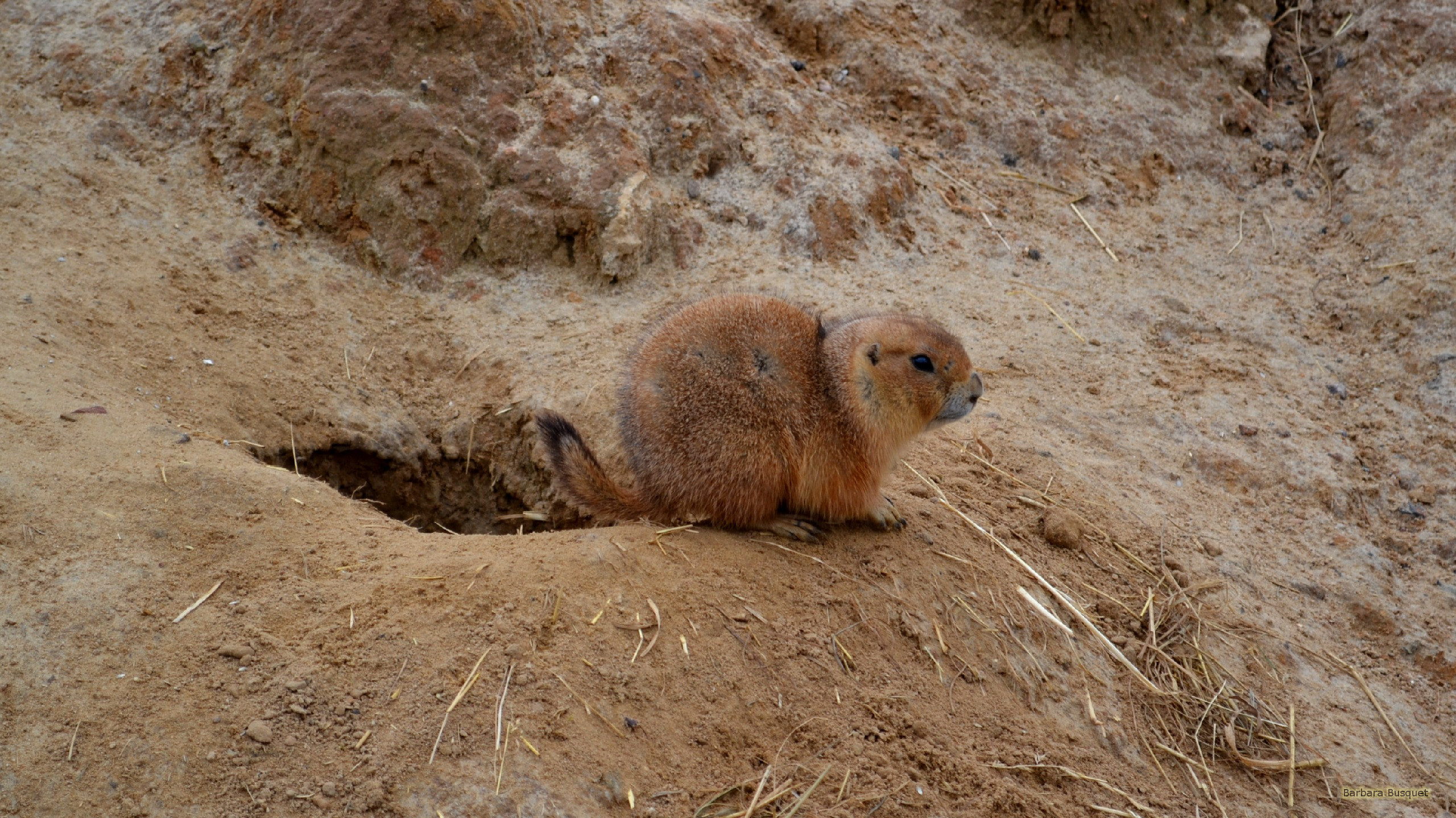 Prairie Dog Food Nature