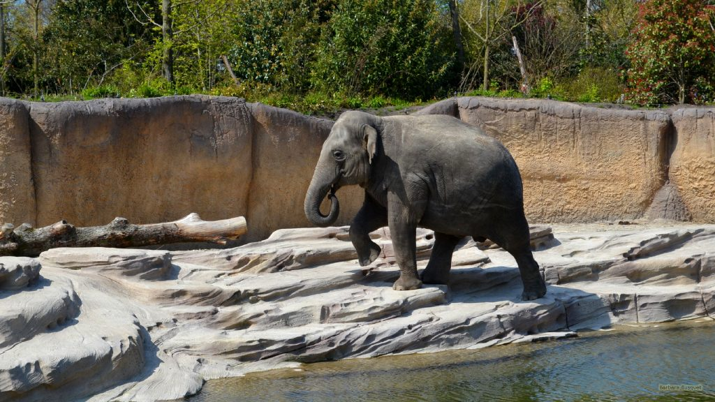 HD wallpaper Elephant near water