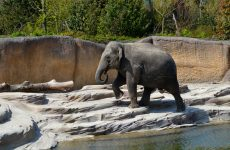 Elephant near the water