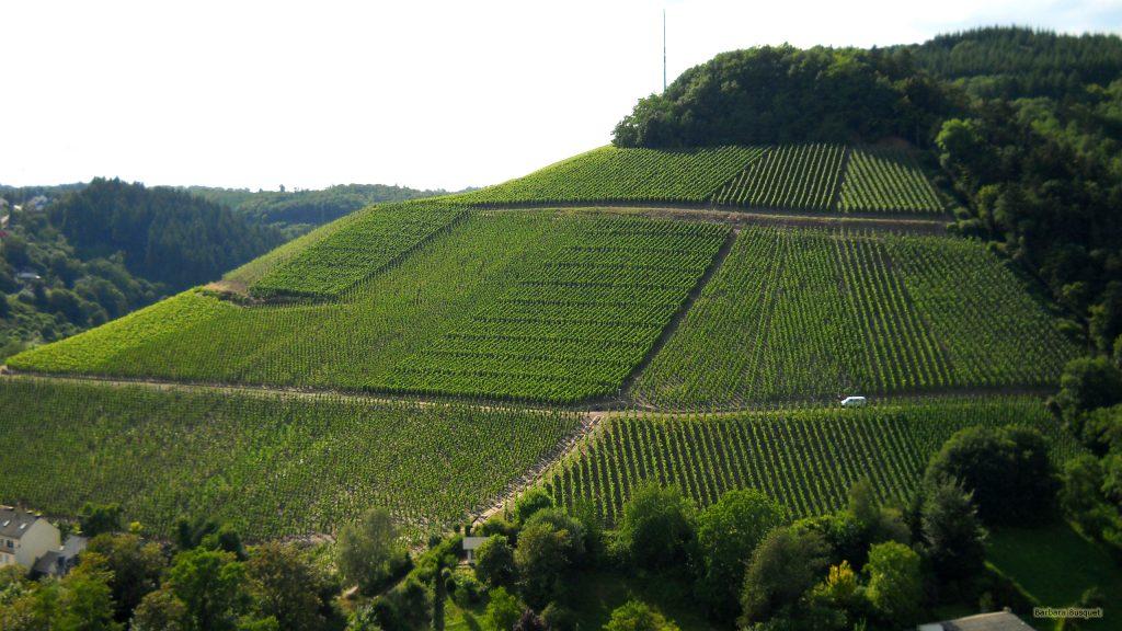 HD wallpaper vineyards on hill