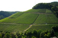 Vineyards on hills