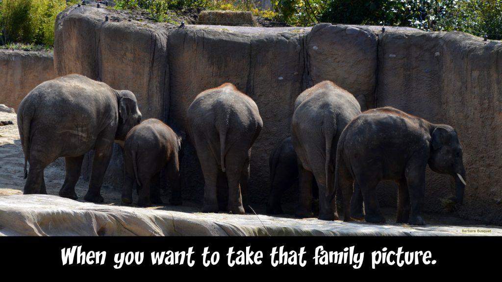 Take family photo