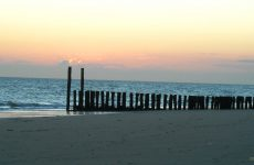 Wooden poles on beach