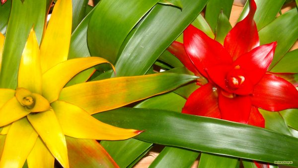 HD wallpaper plants with colored leaves