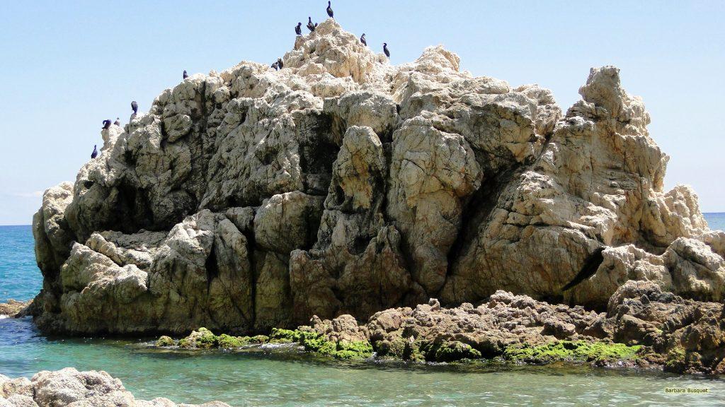 HD photo cormorants on rock in Spain