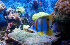Tropical fish and anemones