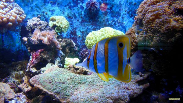 HD wallpaper Tropical fish in aquarium