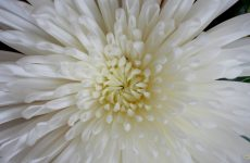 Close-up white flower