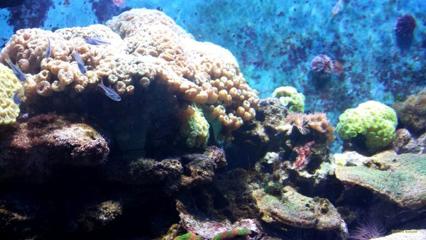HD wallpaper fish in aquarium