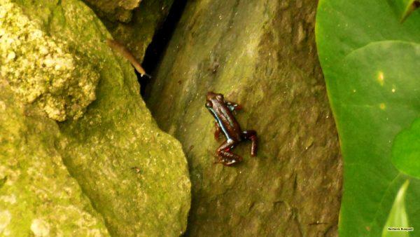 HD wallpaper frog in tree