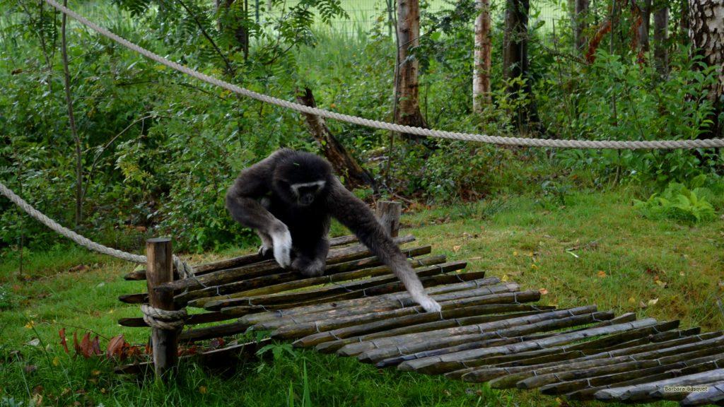 HD wallpaper monkey on bridge