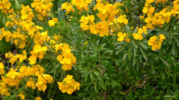 HD wallpaper plant with yellow flowers