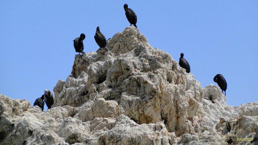 HD wallpaper rock with Great black cormorants