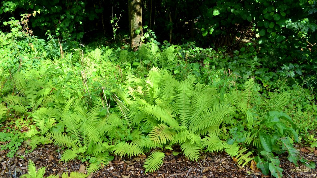 Ferns growing in a forest