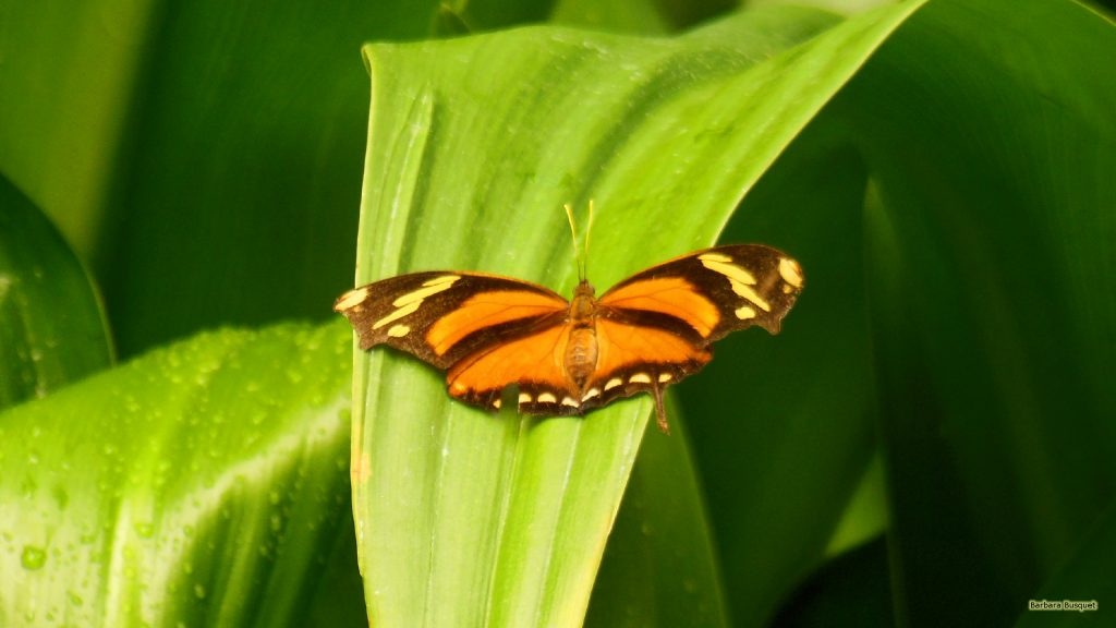 Nature wallpaper with orange butterfly