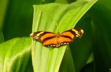 Orange butterfly Wallpapers