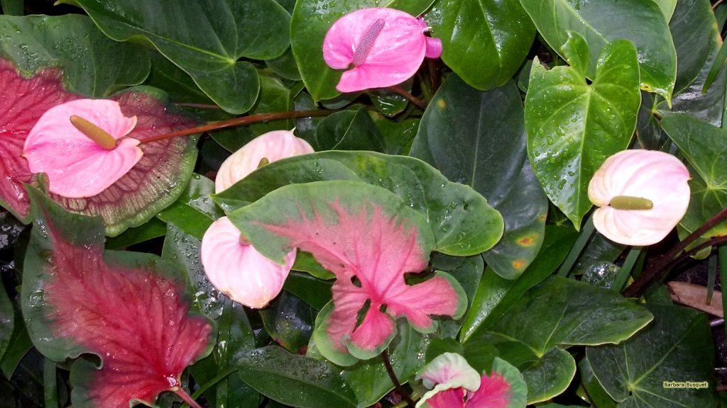 HD wallpaper pink flamingo flowers.