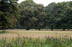 Trees in summer season
