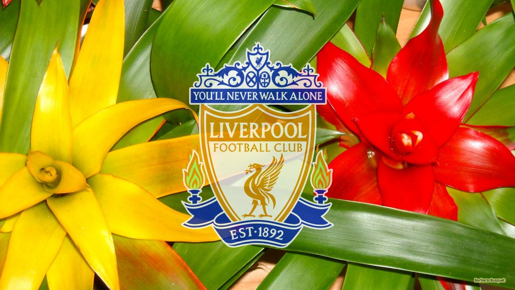 Liverpool wallpaper with yellow blue and red colors