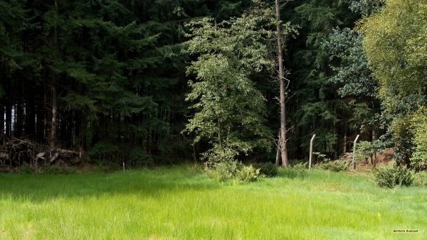 Nature wallpaper grass and forest