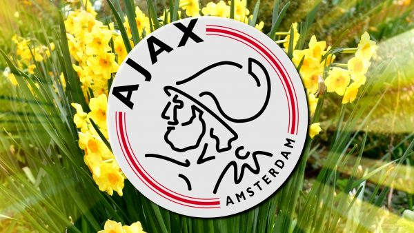Yellow narcissus in spring with Ajax logo.