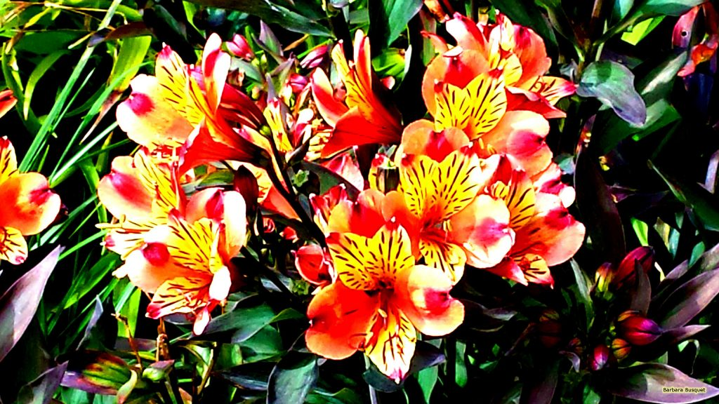 Dark wallpaper with red and yellow flowers.