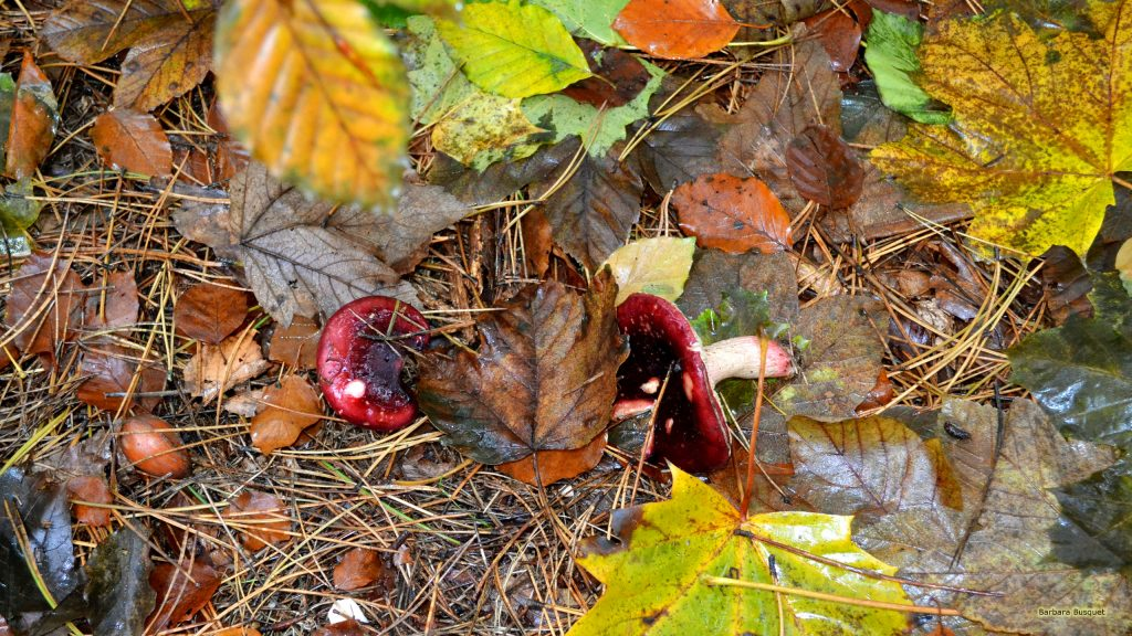 Fall wallpaper leaves and red mushrooms