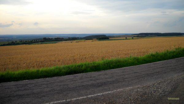 HD wallpaper road with grain fields