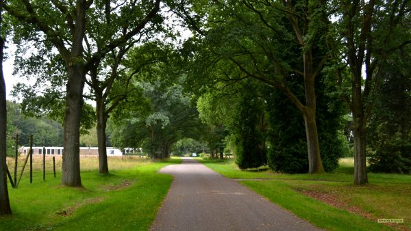 HD wallpaper road and trees.