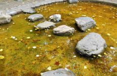 Pond with big rocks and leaves