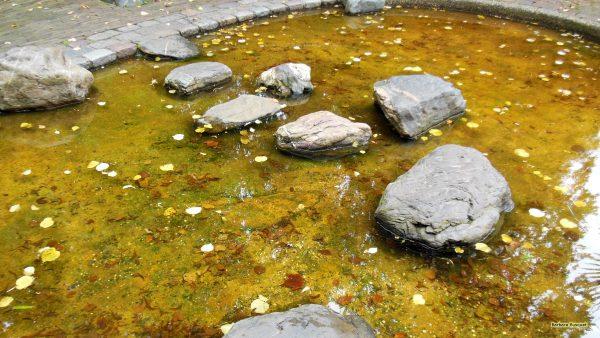 HD Rocks in a pond