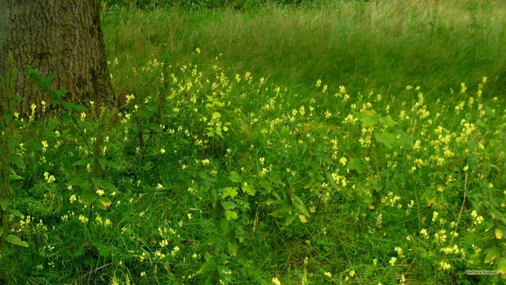 HD wallpaper with tree and yellow flowers in the grass.