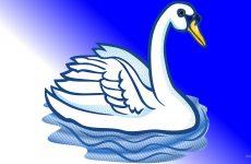 Blue white swan wallpaper