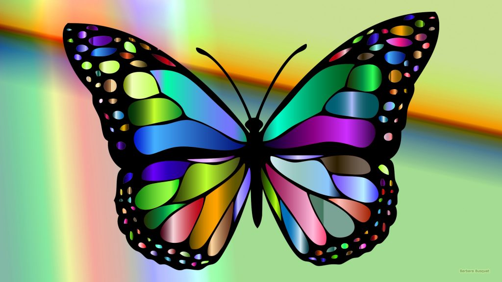 Colorful HD wallpaper with a butterfly.