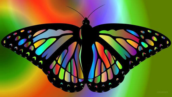 Colorful wallpaper with a butterfly.