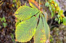 Leaf in early autumn