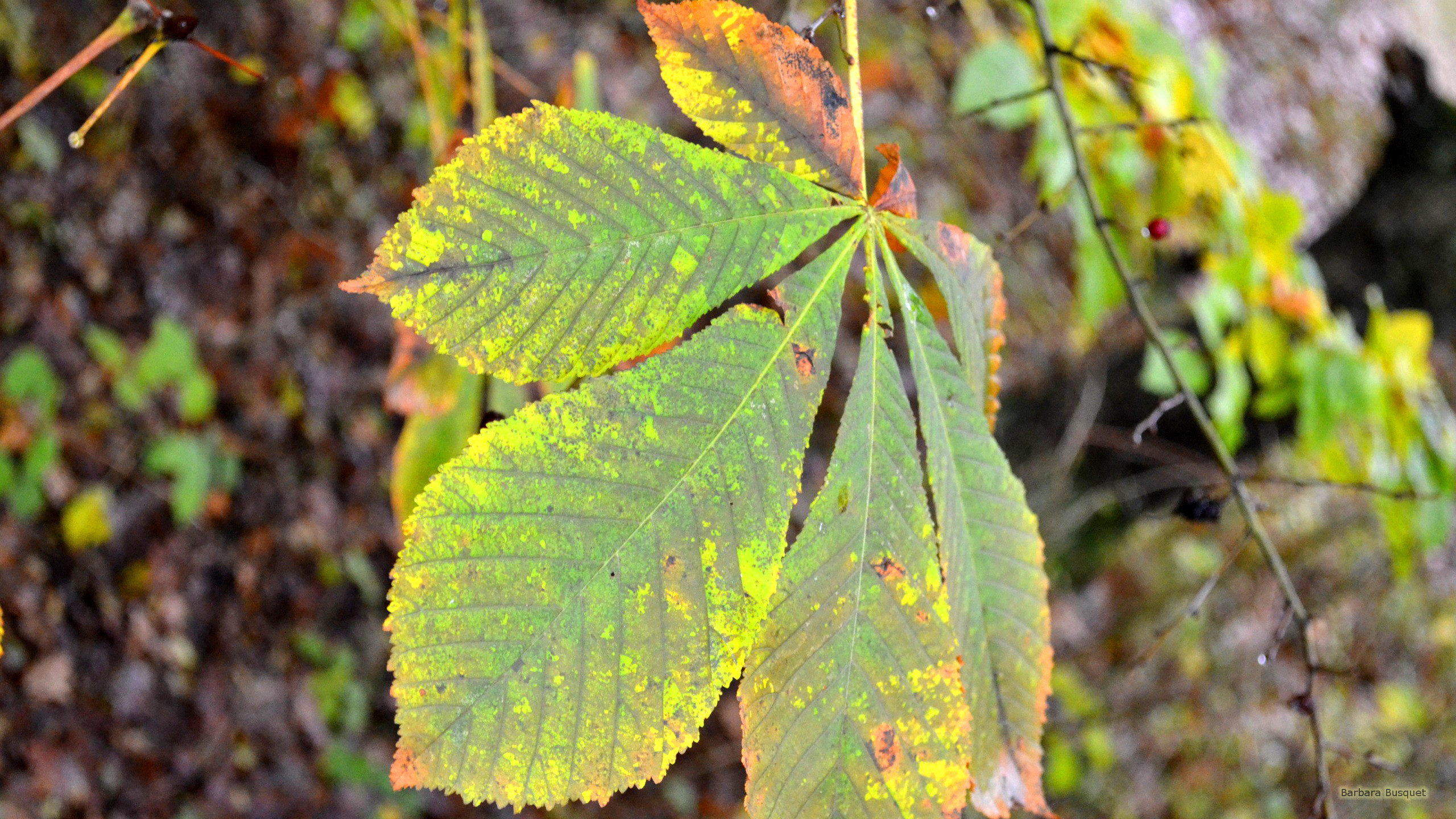 Leaf in early autumn -...