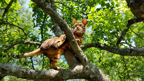 Beautiful HD wallpaper with a cat in a tree.