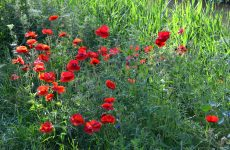 Red flowers near ditch