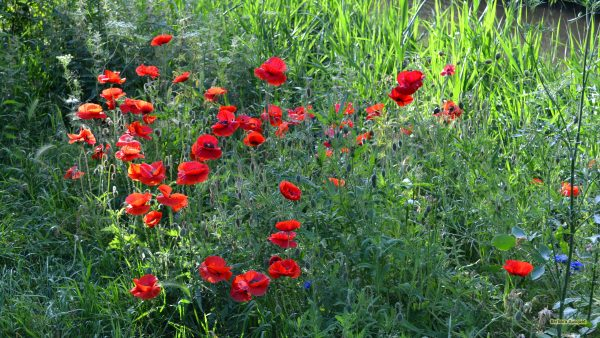 HD wallpaper with flowers near a ditch.