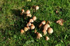 Grass and mushrooms