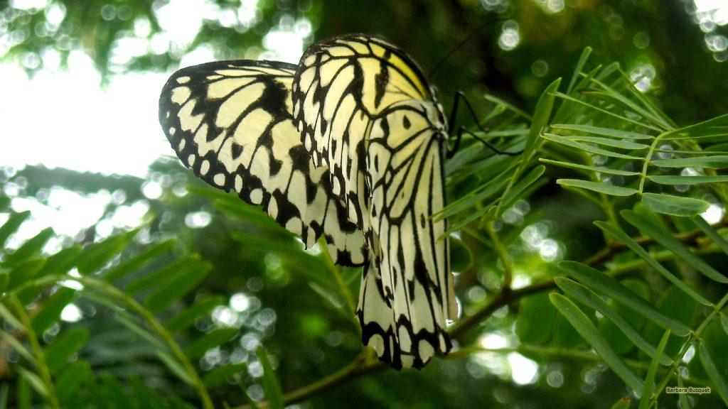 HD wallpaper black white butterfly