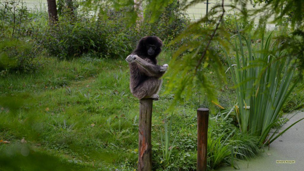 HD wallpaper monkey on a pole
