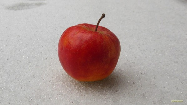 HD wallpaper red apple in the snow