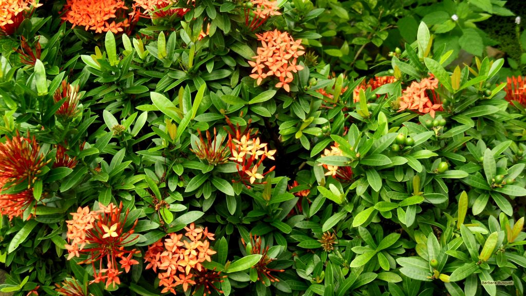 Bushes with orange flowers.