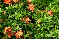 Bushes with orange flowers