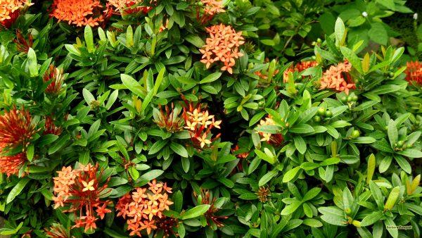 Bushes with orange flowers.