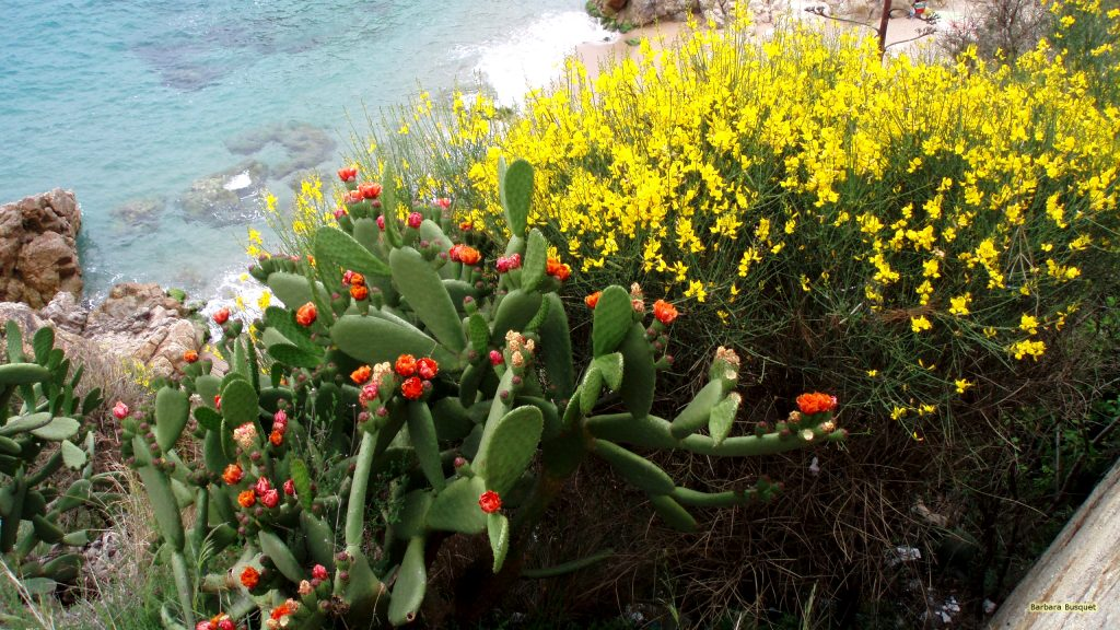 Cactuses and flowers at beach in Spain