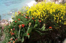 Cactuses and flowers at beach