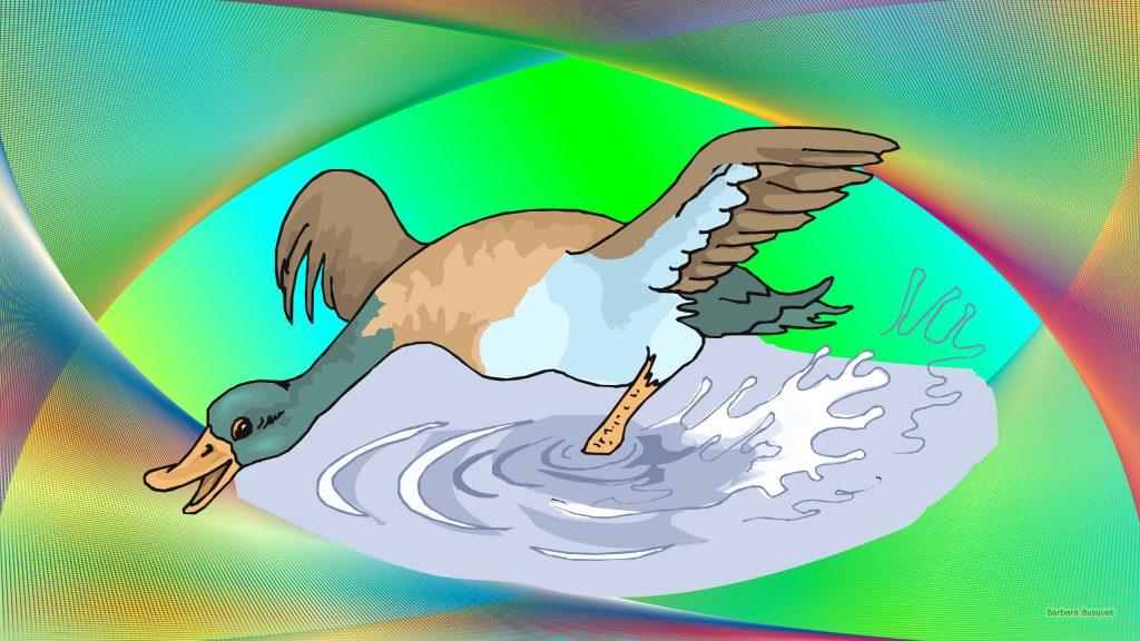 HD wallpaper duck in the water